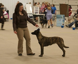 """Cada"" won Best of Breed & Best in Specialty Show!"